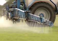 POISONED FIELDS – GLYPHOSATE, AN UNDERRATED RISK?