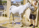 THE HORSE RESCUER – SPAIN'S FORGOTTEN TRAGEDY