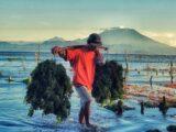THE SEAWEED FARMERS OF NUSA PENIDA